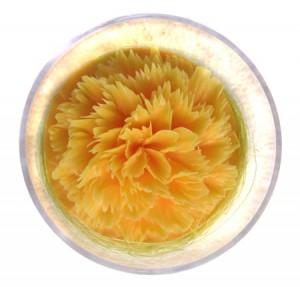 Nelke orange in klarer Dose