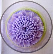 Blüte lavendelfarben in klarer Dose